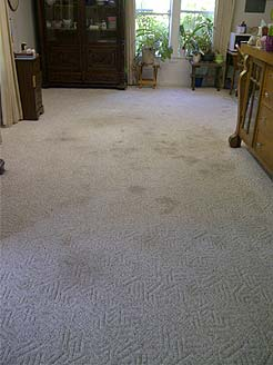 Before stained carpet cleaning.